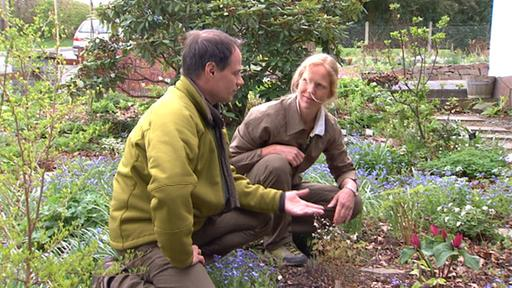 Iris Ney – ästhetische Gartengestaltung